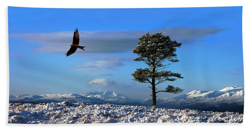 Red Kite Bath Sheet featuring the photograph Red Kite by Gavin Macrae