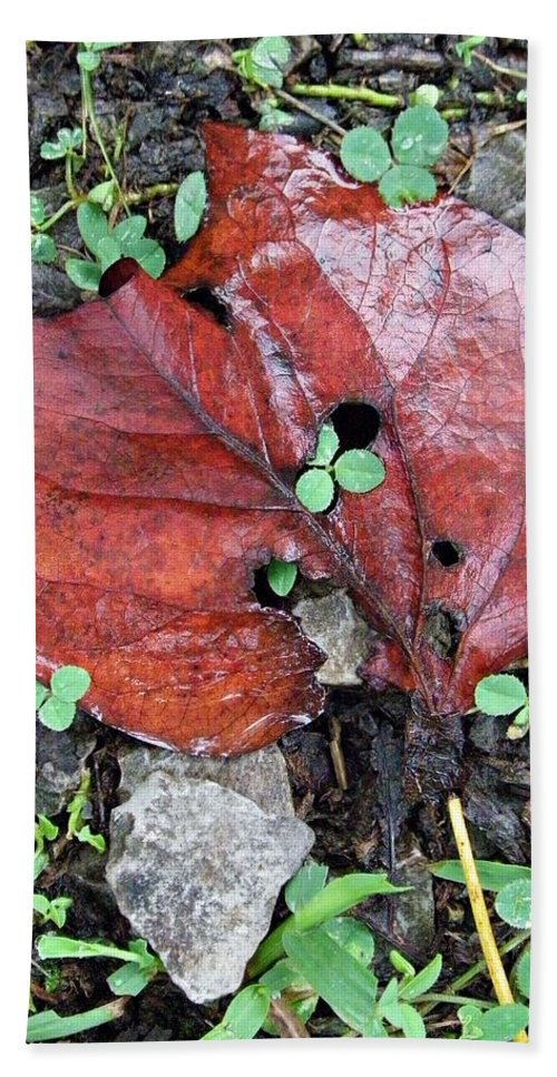 Red Leaf Hand Towel featuring the photograph Red Leaf On Green by Sharon Popek