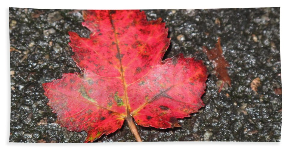Leaves Bath Towel featuring the photograph Red Leaf On Pavement by Barbara McDevitt