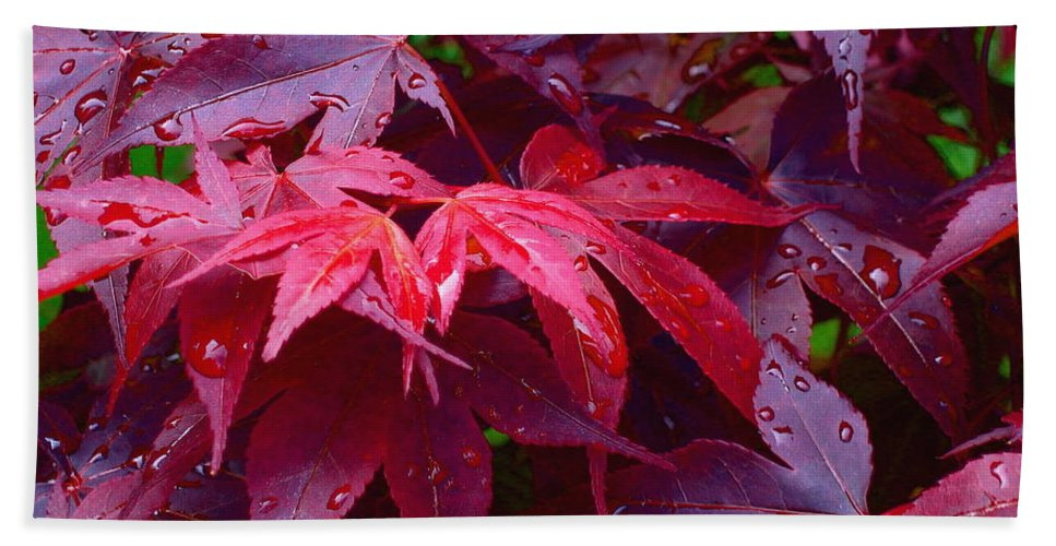 Rain Hand Towel featuring the photograph Red Maple After Rain by Ann Horn