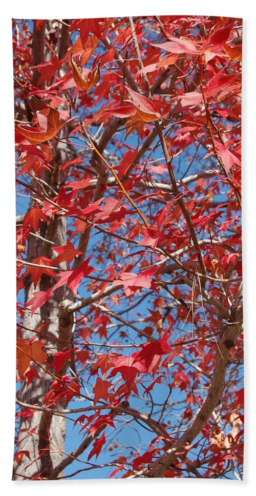 Linda Brody Bath Sheet featuring the photograph Red Maple Leaves by Linda Brody