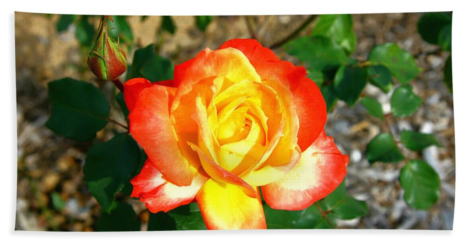 Red Hand Towel featuring the photograph Red Orange And Yellow Rose by Darren Burton
