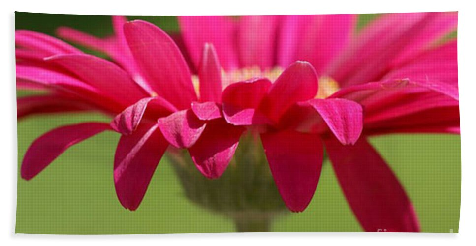 Pink Hand Towel featuring the photograph Red Pink Daisy by Carol Lynch