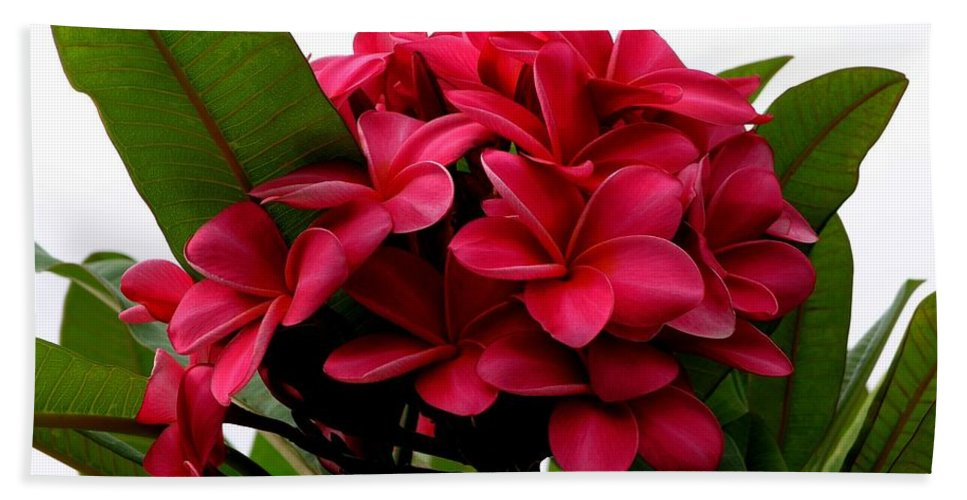 Plumeria Bath Towel featuring the photograph Red Plumeria by Mary Deal