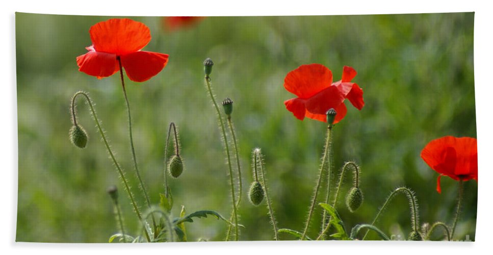 Poppies Hand Towel featuring the photograph Red Poppies 2 by Carol Lynch