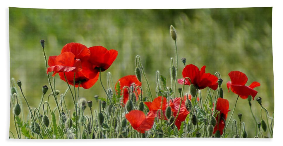 Poppies Bath Sheet featuring the photograph Red Poppies 3 by Carol Lynch