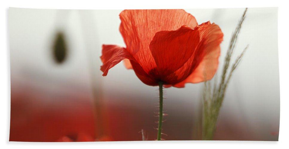 Poppy Bath Towel featuring the photograph Red Poppy Flowers by Nailia Schwarz