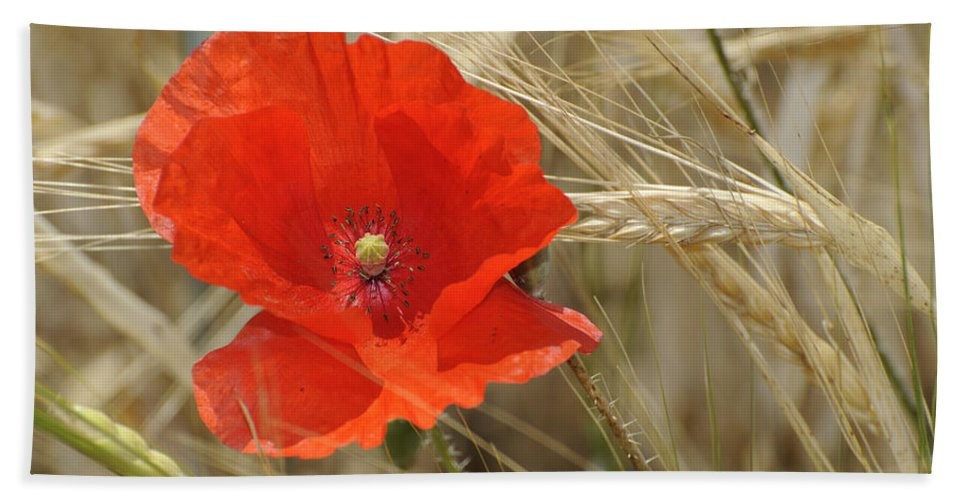 Poppy Bath Sheet featuring the photograph Red Poppy by Guido Montanes Castillo