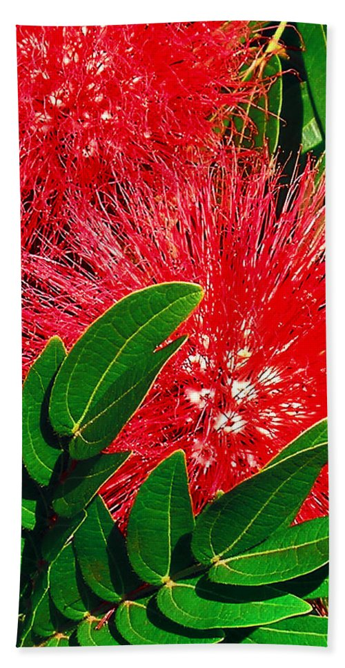 Red Powder Puff Bath Sheet featuring the photograph Red Powder Puff by James Temple