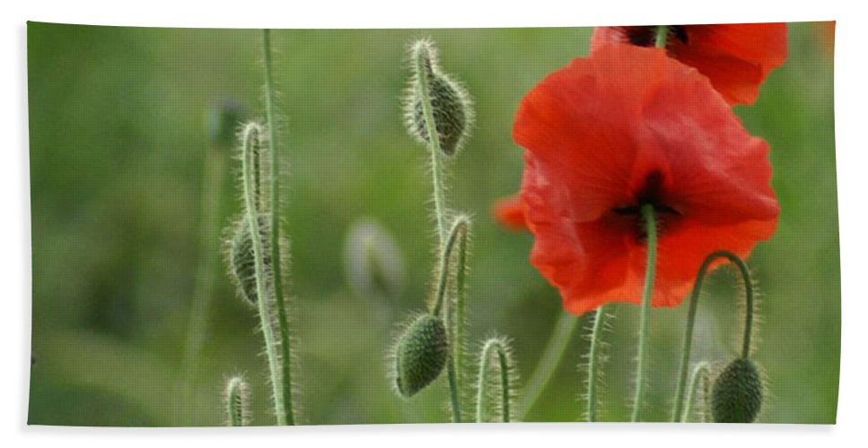 Poppies Hand Towel featuring the photograph Red Red Poppies 1 by Carol Lynch
