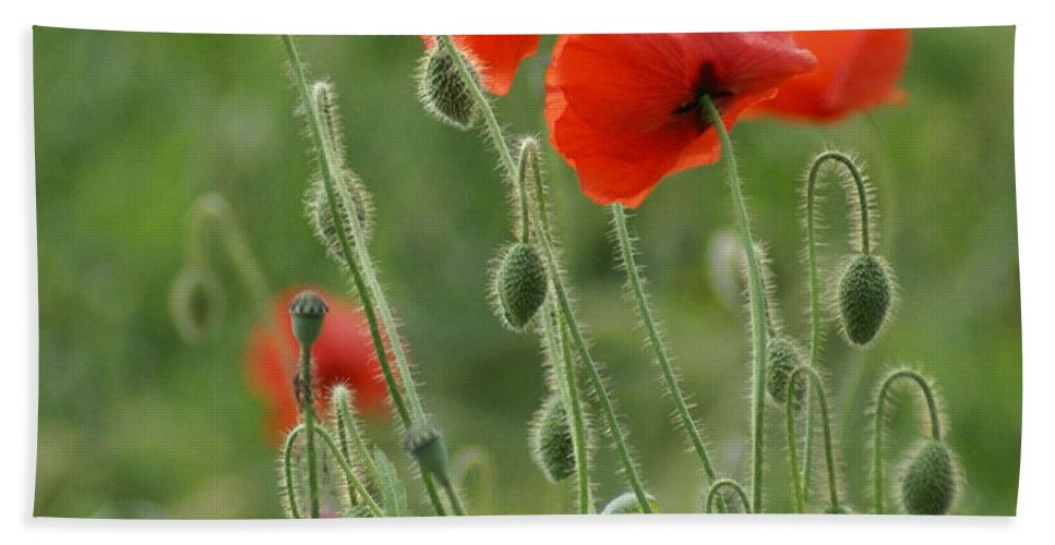 Poppies Hand Towel featuring the photograph Red Red Poppies 2 by Carol Lynch