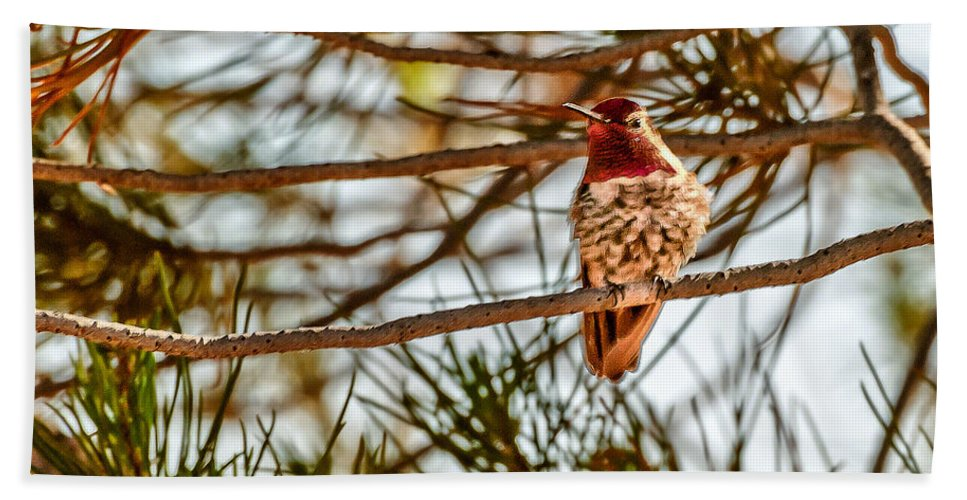 Bird Bath Sheet featuring the photograph Red Rock Country Hummingbird by Bob and Nadine Johnston