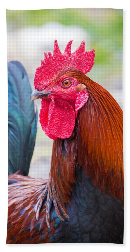 Rooster Bath Sheet featuring the photograph Red Rooster by Nicholas Blackwell