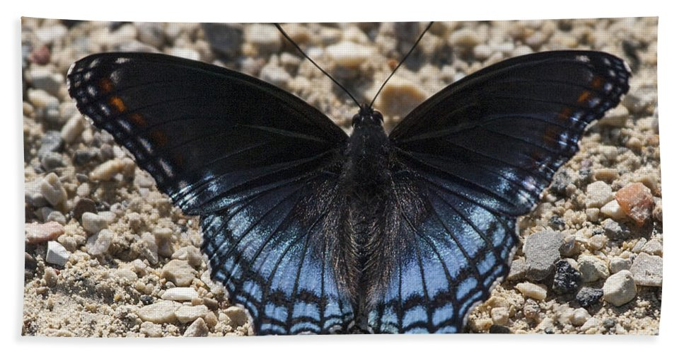 Red Spotted Purple Hand Towel featuring the photograph Red Spotted Purple Butterfly by Emma England