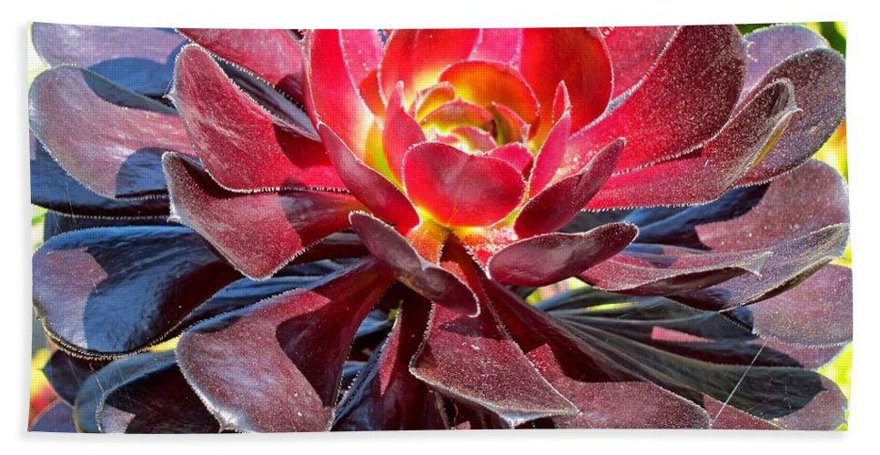 Aeonium Cyclops Hand Towel featuring the photograph Red Succulent Plant by Lena Photo Art