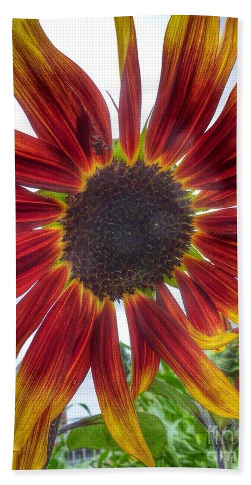 Flower Hand Towel featuring the photograph Red Sunflower by Susan Garren