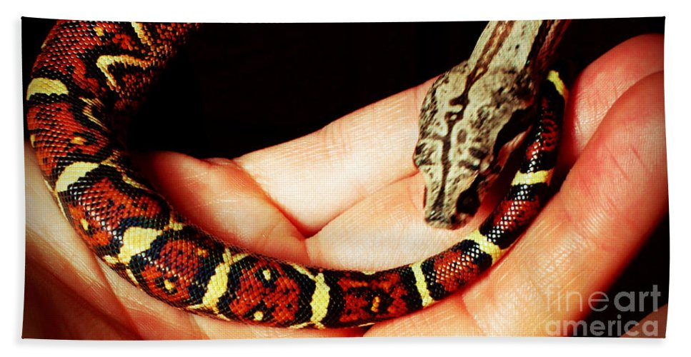 Red Bath Sheet featuring the photograph Red Tail Baby Boa - Snake - Pet by Barbara Griffin