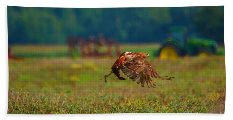 Hawk Bath Sheet featuring the photograph Red-tailed Hawk by Deanna Cagle