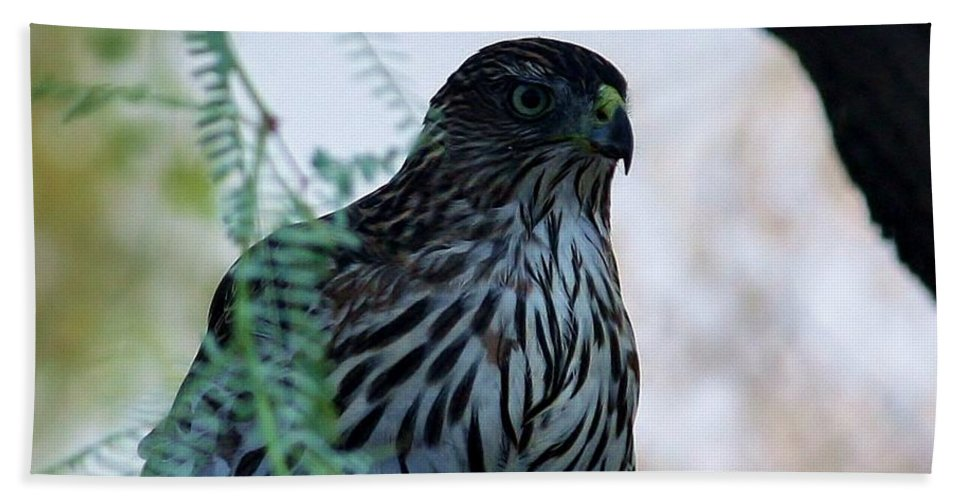 Bird Bath Sheet featuring the photograph Red Tailed Hawk by Marcia Breznay