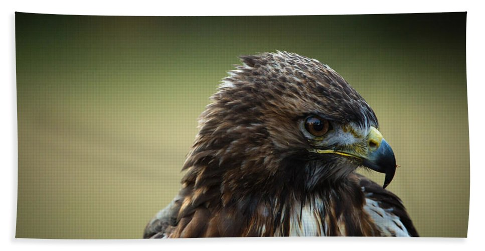 Bird Hand Towel featuring the photograph Red-tailed Hawk Portrait by Christy Cox