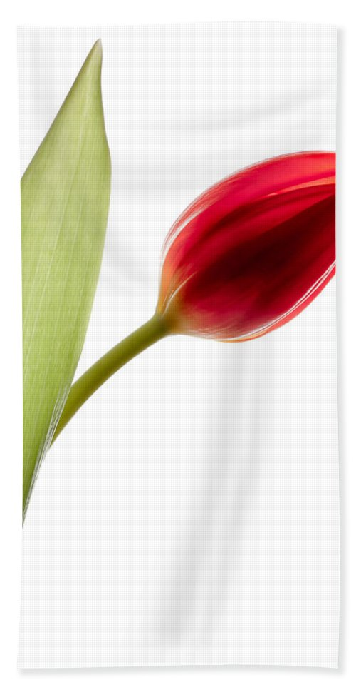 Red Tulip Hand Towel featuring the photograph Red Tulip by Dave Bowman