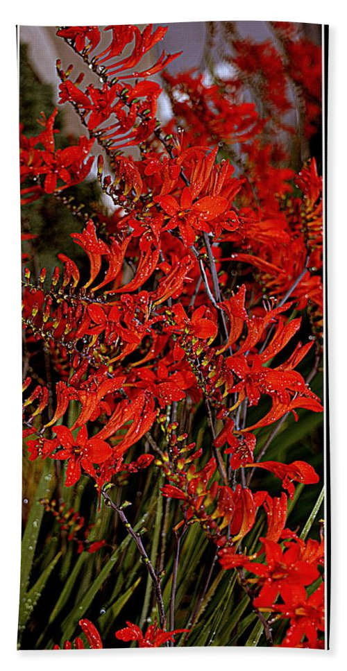 Flowers Hand Towel featuring the photograph Red Devils Tongue Vine Vertical by Kathy Barney