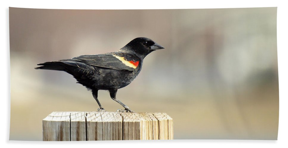 Red Winged Blackbird Hand Towel featuring the photograph Red Winged Blackbird by Thomas Young