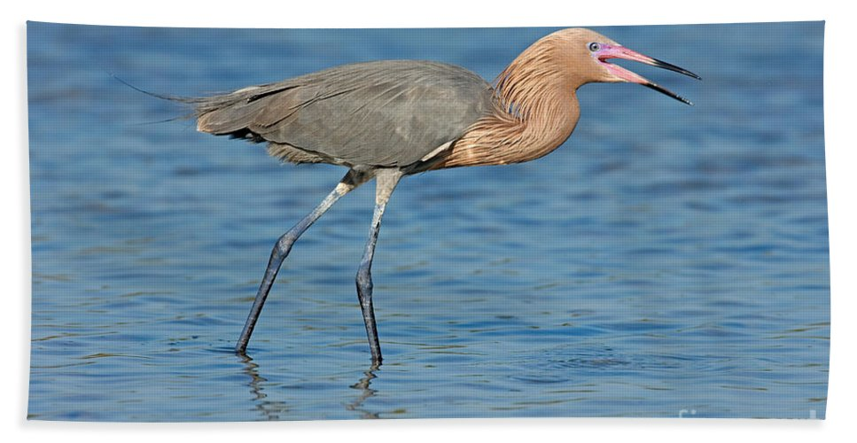 Animal Hand Towel featuring the photograph Reddish Egret by Anthony Mercieca