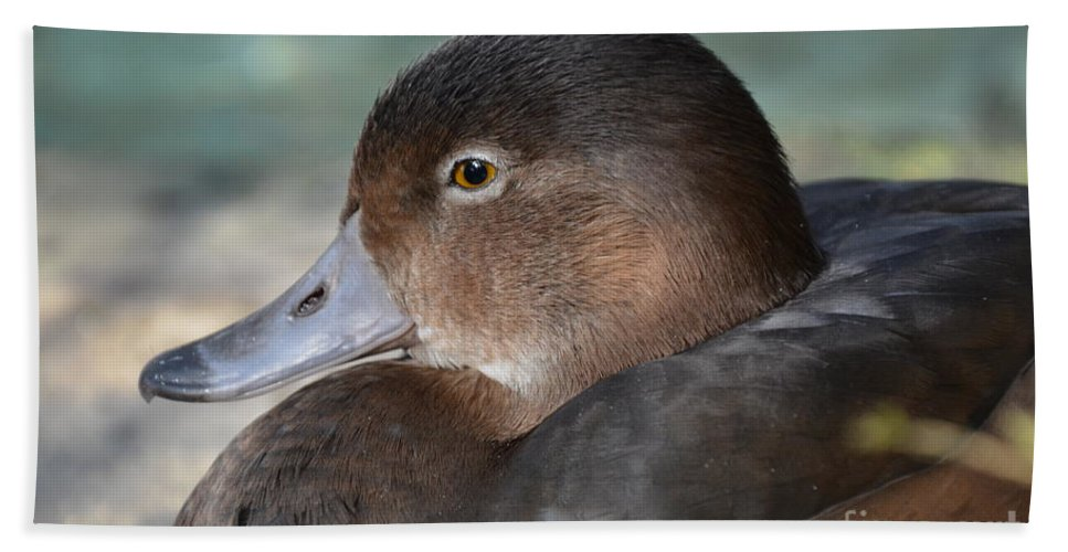 Redhead Duck Hand Towel featuring the photograph Redhead Duck by Robert Meanor