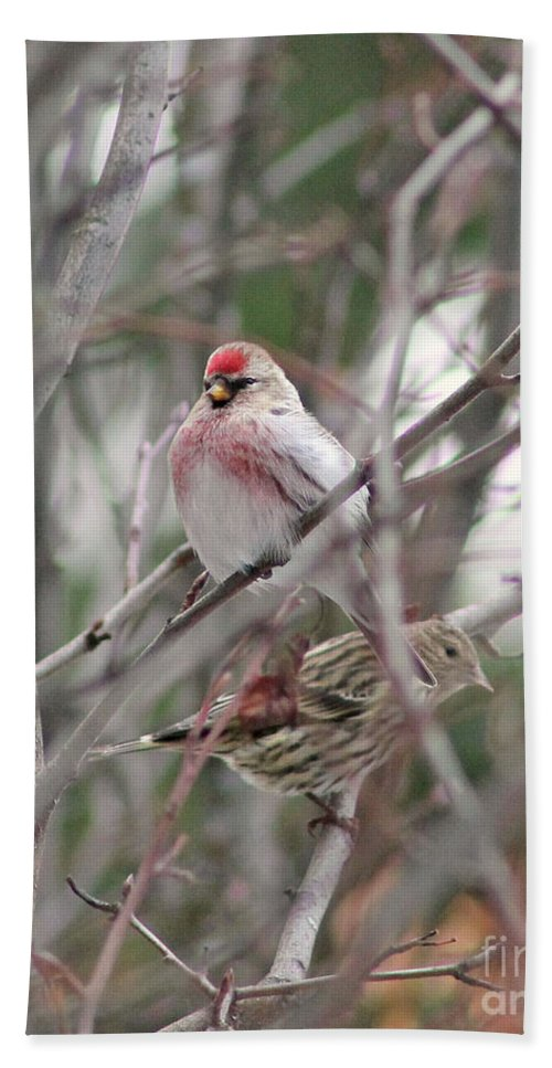 Redpoll Bath Sheet featuring the photograph Redpoll And Pine Siskin by Leone Lund