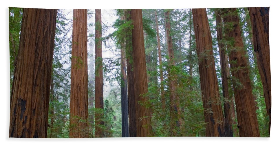 Photography Bath Sheet featuring the photograph Redwood Trees by Panoramic Images