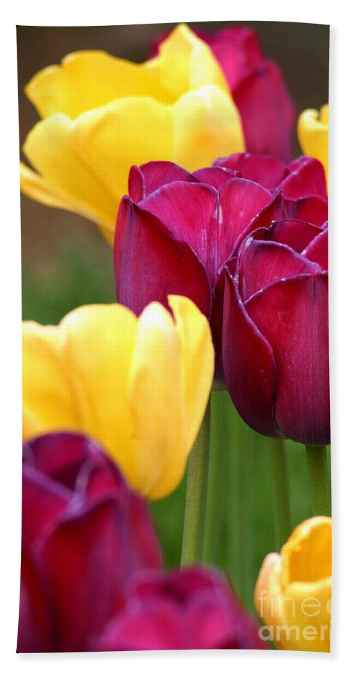 Tulip Bath Sheet featuring the photograph Redyellowtulips6728 by Gary Gingrich Galleries