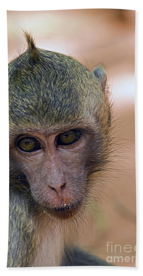 Reese's Monkey Hand Towel featuring the photograph Reese's Monkey Portrait by J L Woody Wooden