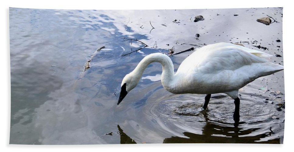 Reflection Bath Sheet featuring the photograph Reflection Of A Lone White Swan by Maria Urso