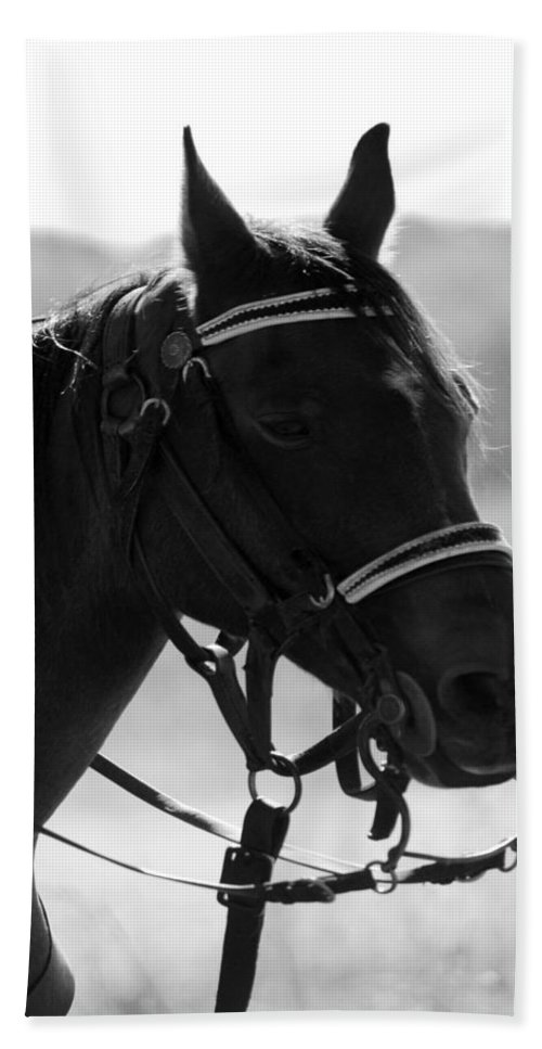 Horse Bath Sheet featuring the photograph Reflections Of The Past by Pamela Peters