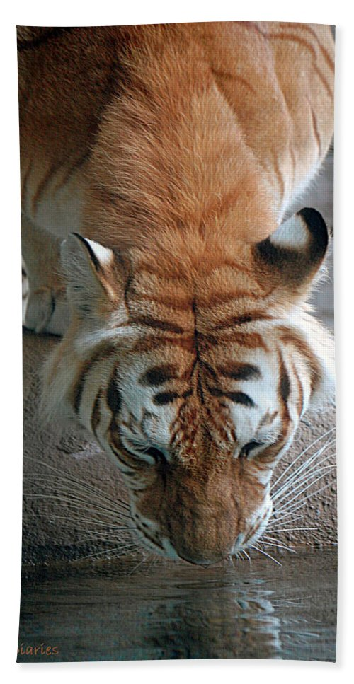 Tiger Bath Sheet featuring the digital art Reflections Of The Wild by DigiArt Diaries by Vicky B Fuller