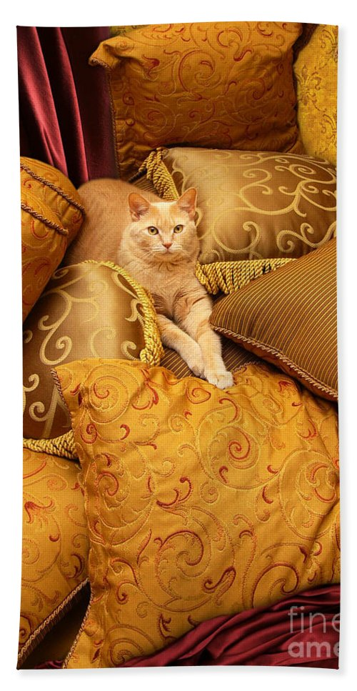 Animal Bath Sheet featuring the photograph Regal Feline by Amy Cicconi