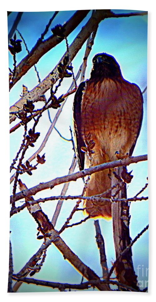 Acrylic Prints Hand Towel featuring the photograph Regal Raptor I by Bobbee Rickard