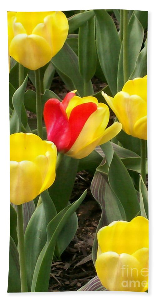 Invitation Hand Towel featuring the photograph Renegade Tulip by Laurie Eve Loftin