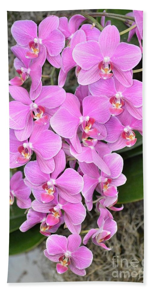 Awesome Orchid Hand Towel featuring the photograph Resplendent Orchid by Sonali Gangane