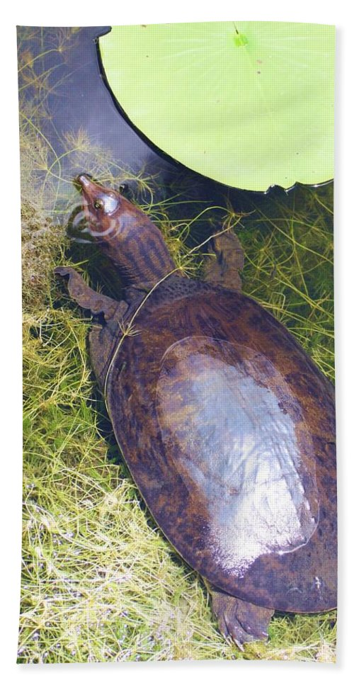 Soft Shell Turtle Hand Towel featuring the photograph Resting On Weeds by Chuck Hicks