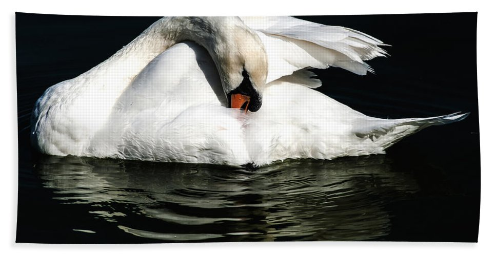 Mute Swan Hand Towel featuring the photograph Resting Swan by Norman Johnson