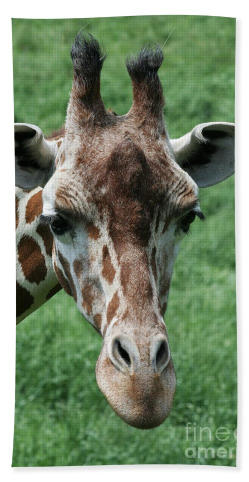Reticulated Giraffe Hand Towel featuring the photograph Reticulated Giraffe by Judy Whitton