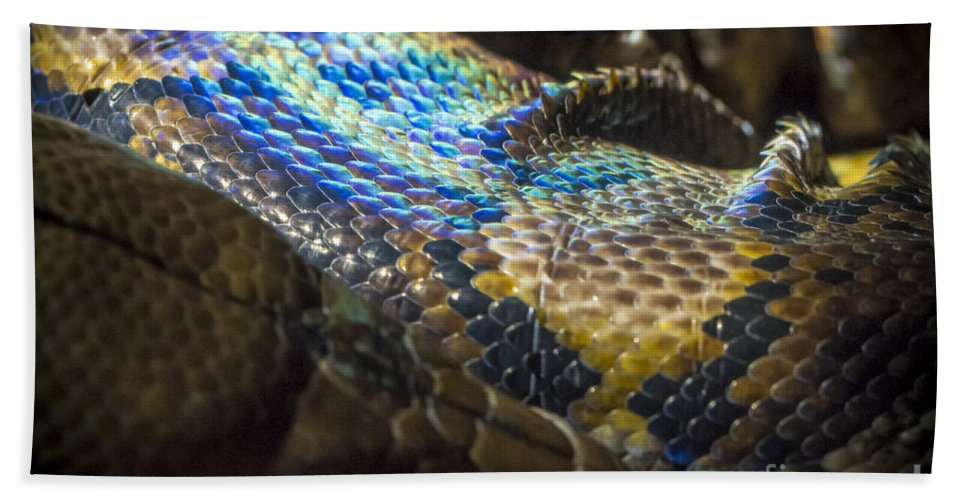 Clare Bambers Bath Sheet featuring the photograph Reticulated Python With Rainbow Scales 2 by Clare Bambers