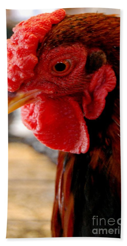 Poultry Bath Sheet featuring the photograph Rhode Island Red by Eunice Miller
