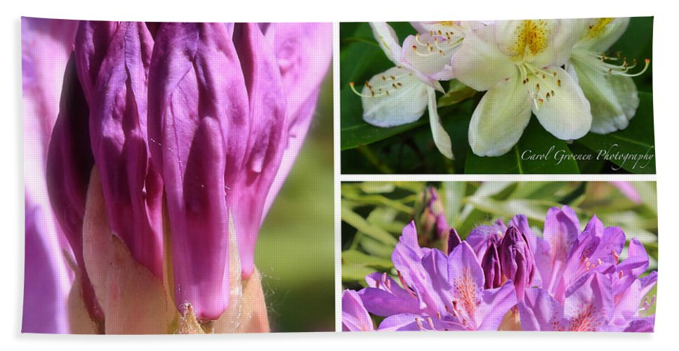 Rhododendron Hand Towel featuring the photograph Rhododendron Collage by Carol Groenen
