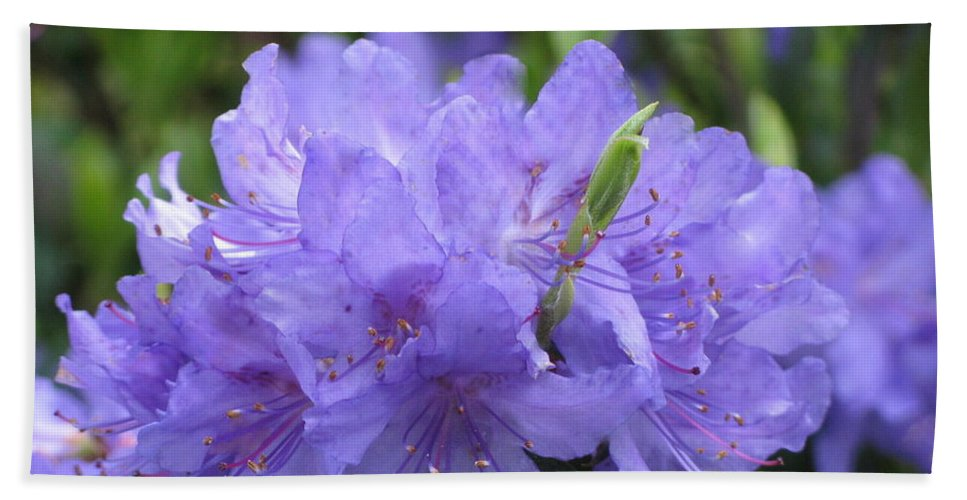 Rhododendron Bath Sheet featuring the photograph Rhododendron Impeditum by Lena Photo Art
