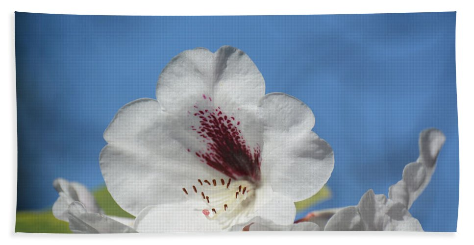 Flower Bath Sheet featuring the photograph Rhododendron In White And Burgundy by Lena Photo Art