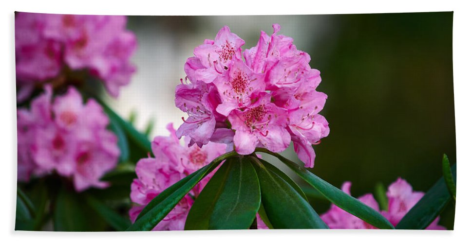 Lehto Bath Sheet featuring the photograph Rhododendron by Jouko Lehto