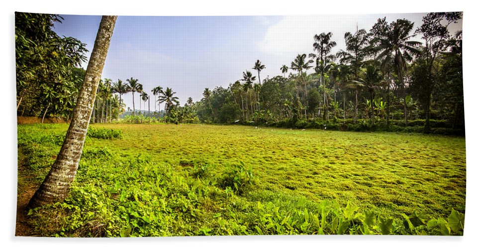 Kerala Hand Towel featuring the photograph Rice Field by Jijo George